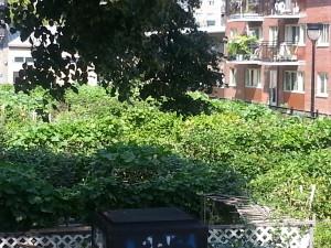 Montreal Vegetable Garden