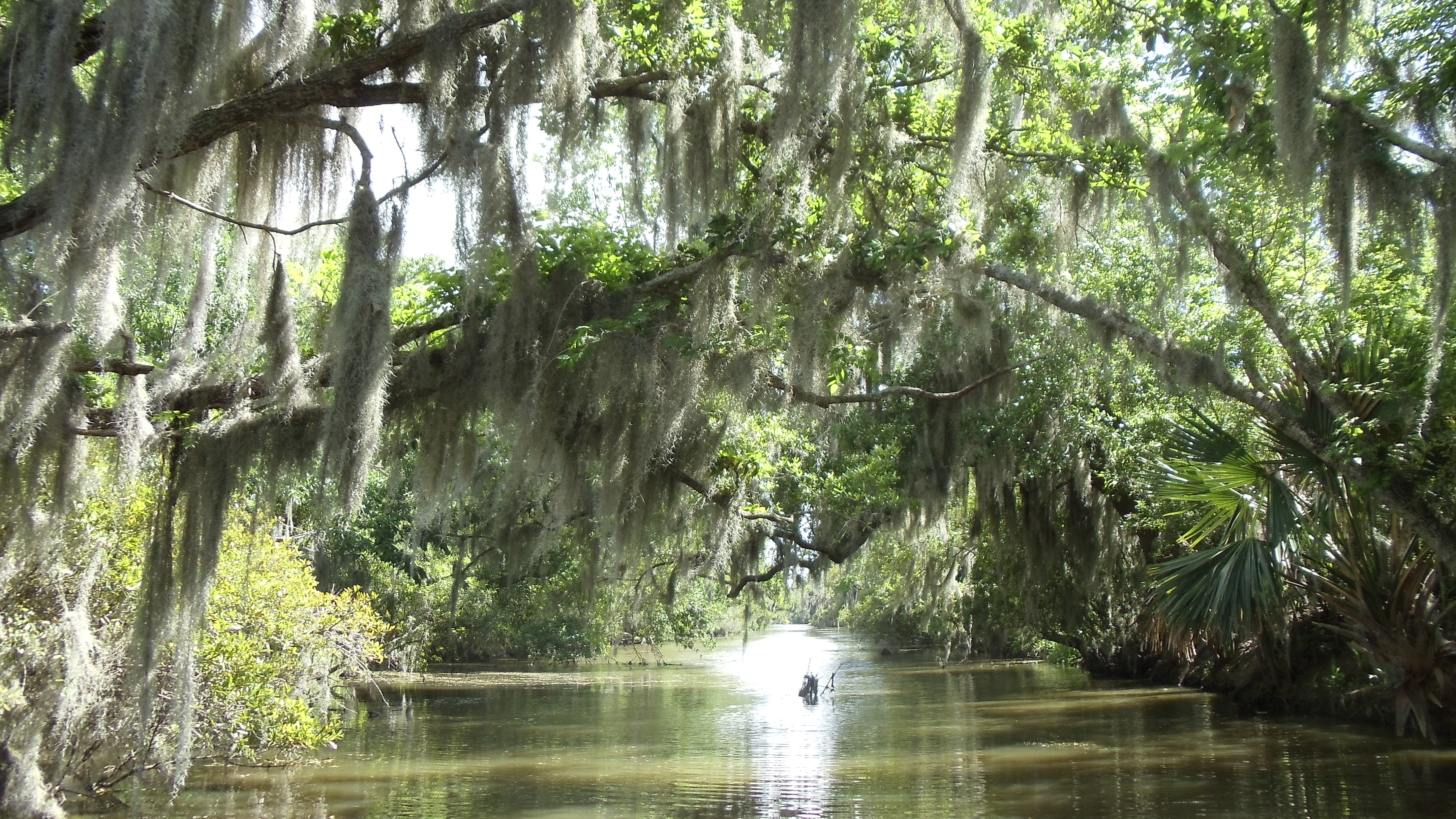 New Orleans Moss1