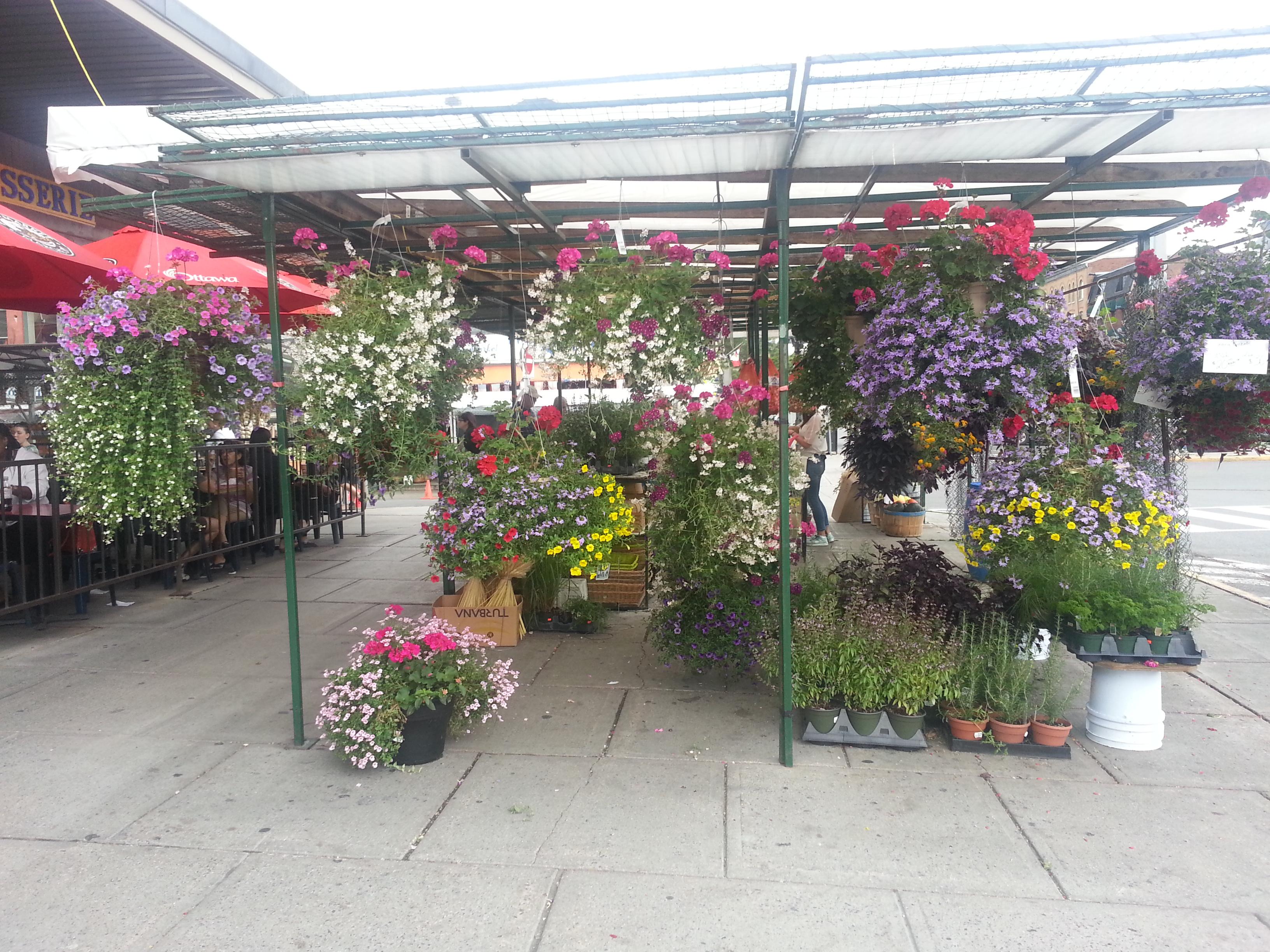 Byward Market Flowers
